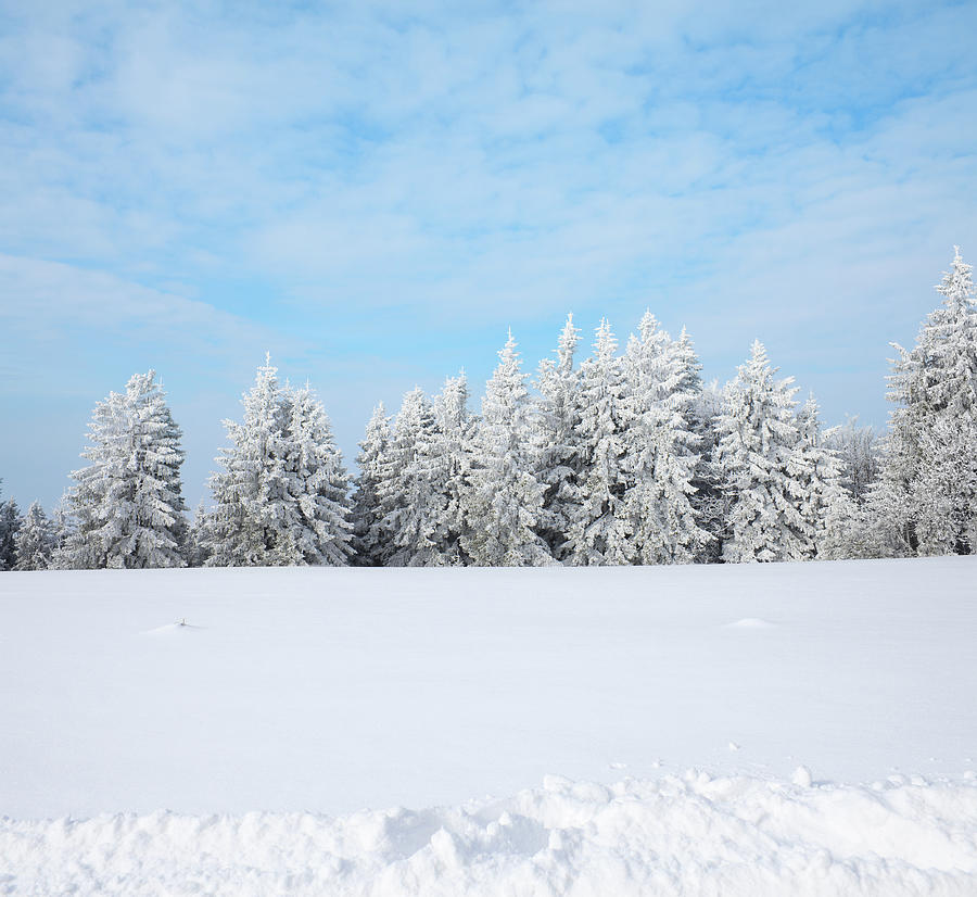 Winter Forest Photograph by Borchee