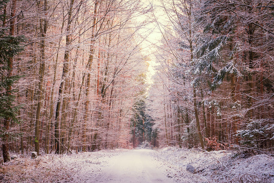 Winter Photograph - Winter Woodland Road by Toby Luxberg