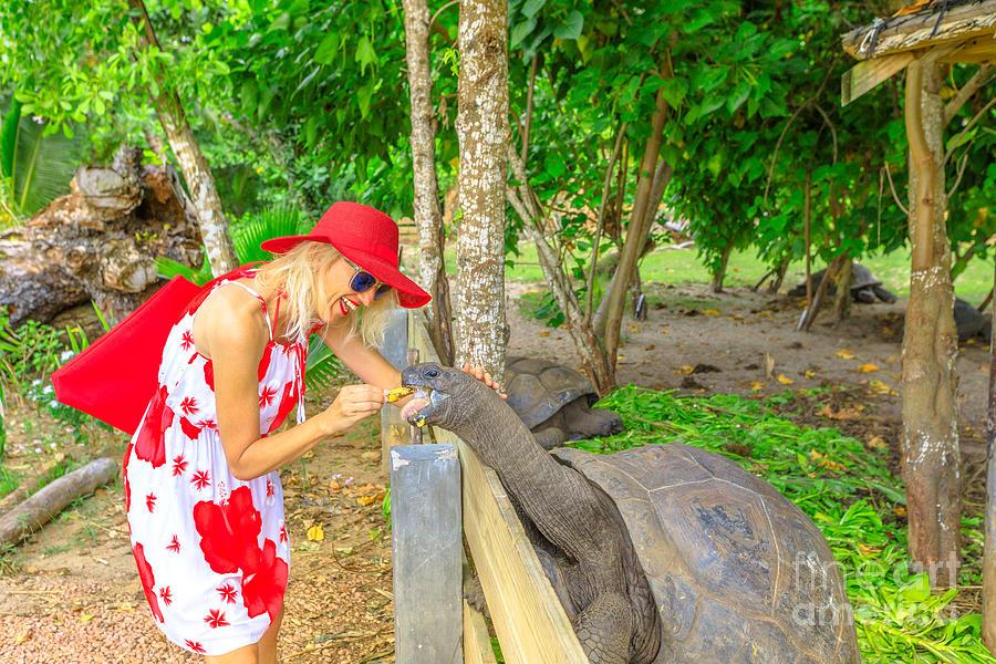 Woman feeding giant tortoise by Benny Marty