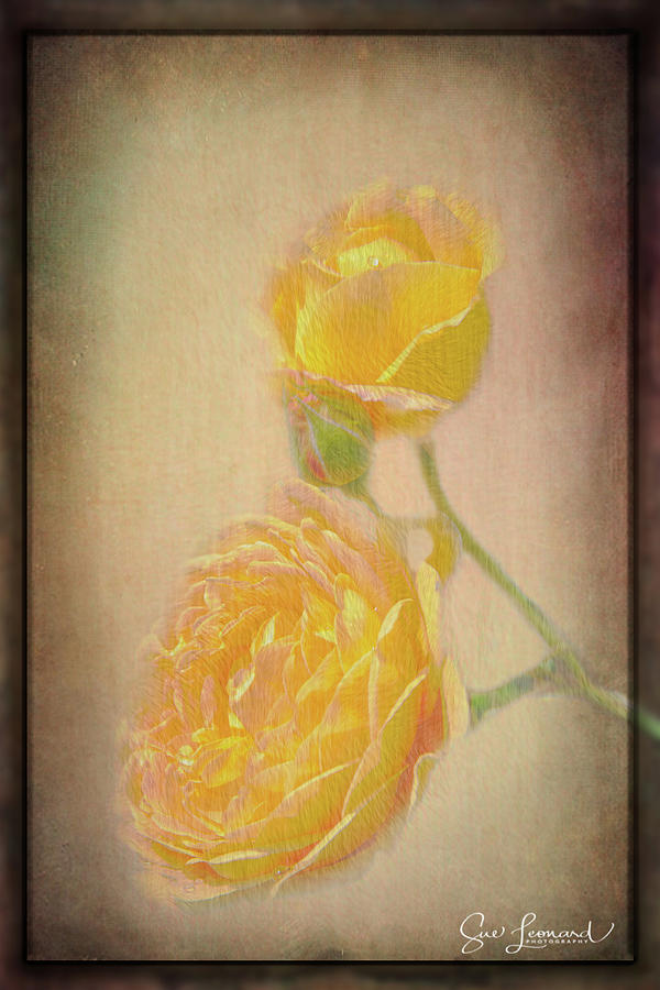 Yellow Roses by Susan Leonard