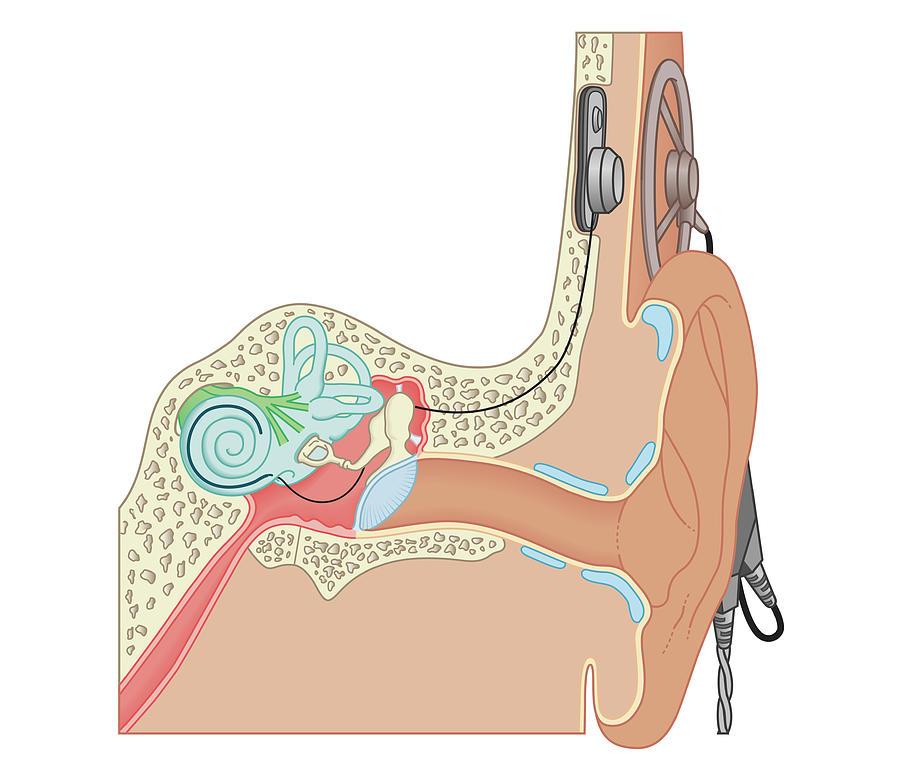 Cross Section Biomedical Illustration Digital Art by Dorling Kindersley