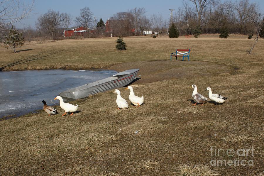 1029 - The Geese of Wheeling Road II by Sheryl L Sutter