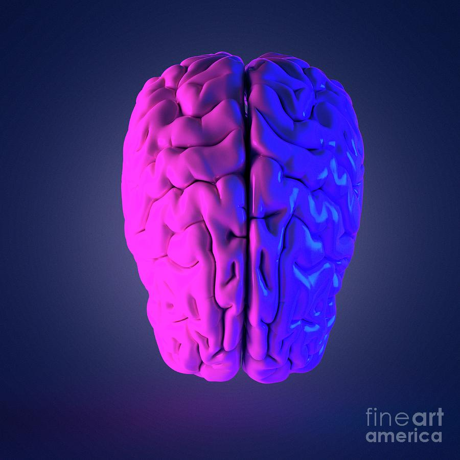 Isolated Photograph - Human Brain by Sebastian Kaulitzki/science Photo Library