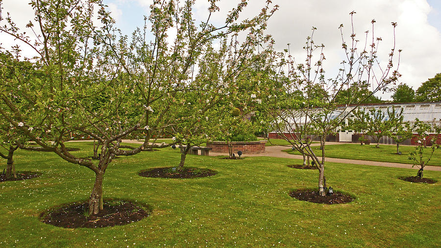 11/05/19 CHORLEY. Astley Hall. Walled Garden. The Orchard. by Lachlan Main
