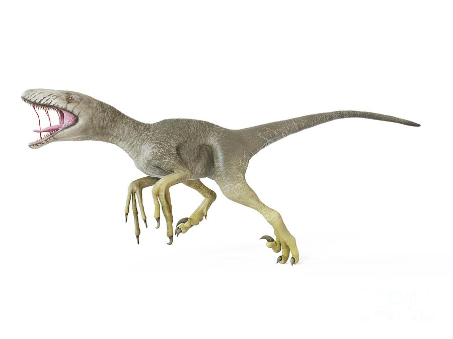Prehistoric Photograph - Illustration Of A Dakotaraptor 11 by Sebastian Kaulitzki/science Photo Library