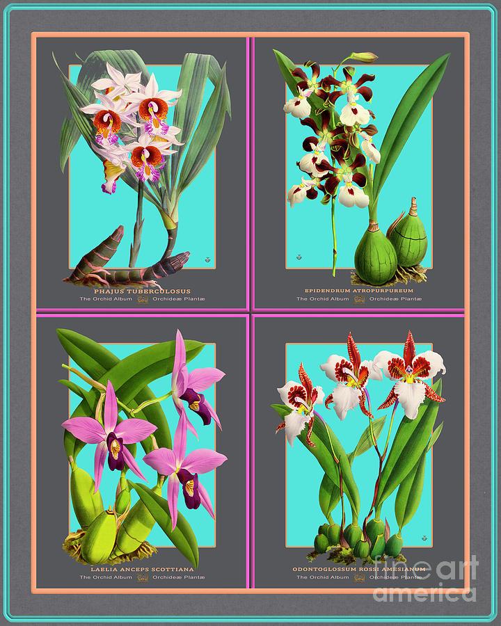 Collage Vintage Orchids Quatro Mixed Media