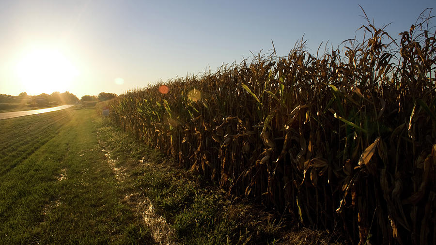 116 Field Light by Dylan Punke