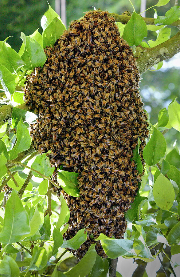 Apiculture Photograph - 1161-1226 by Robert Harding Picture Library