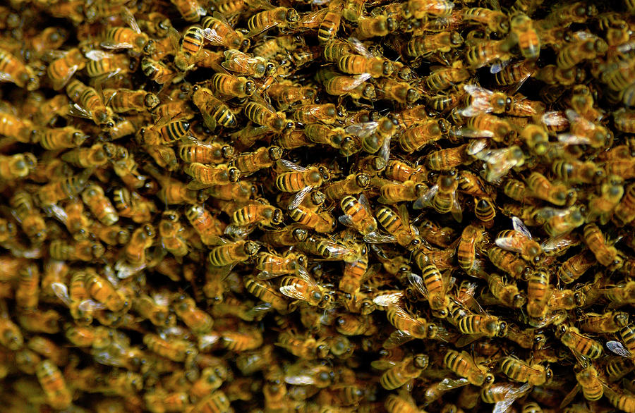 Apiculture Photograph - 1161-398 by Robert Harding Picture Library
