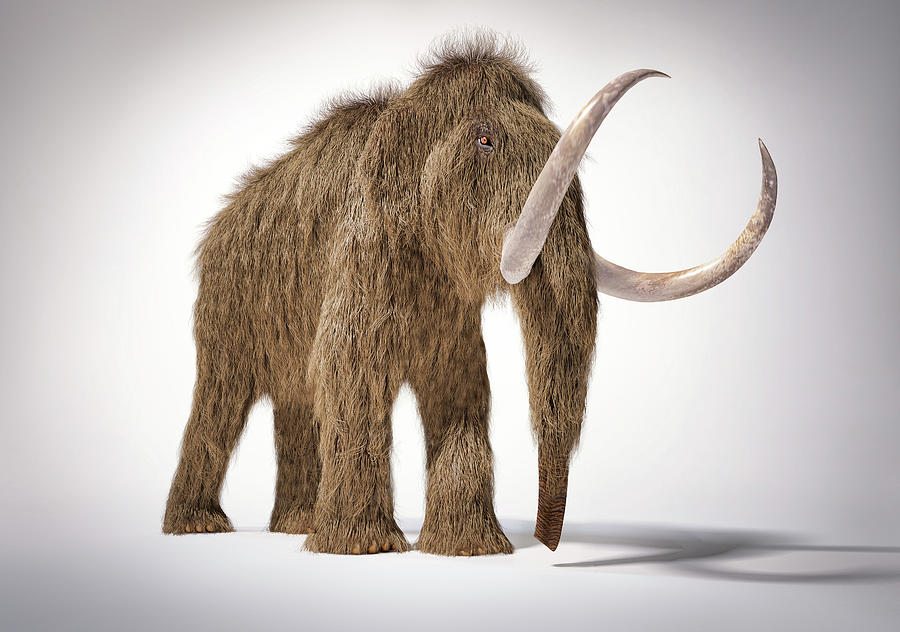 3d Illustration Of Woolly Mammoth by Leonello Calvetti