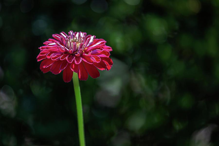 Summer Flower by Robert Ullmann