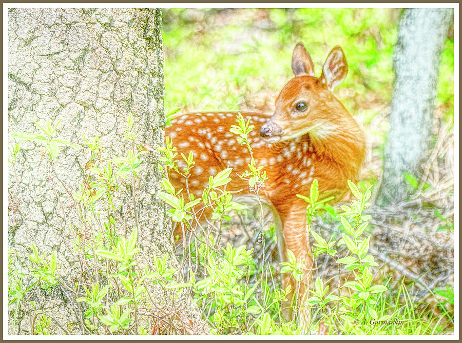 White-tailed Deer Fawn by A Gurmankin
