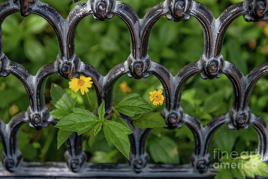 Carolina Iron Gardens Photograph