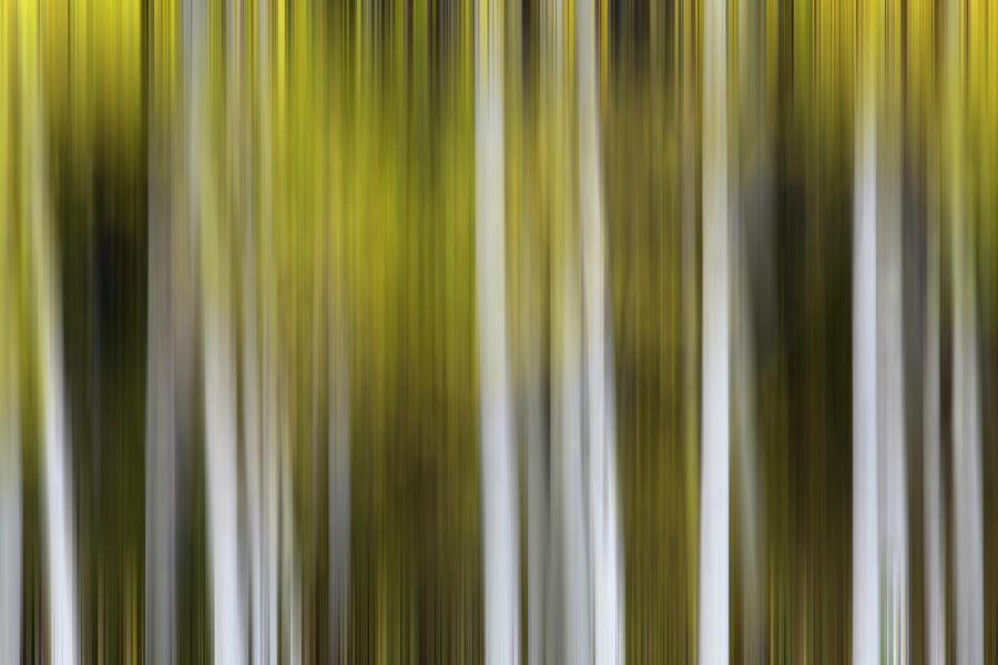 USA, Colorado, White River National by Jaynes Gallery