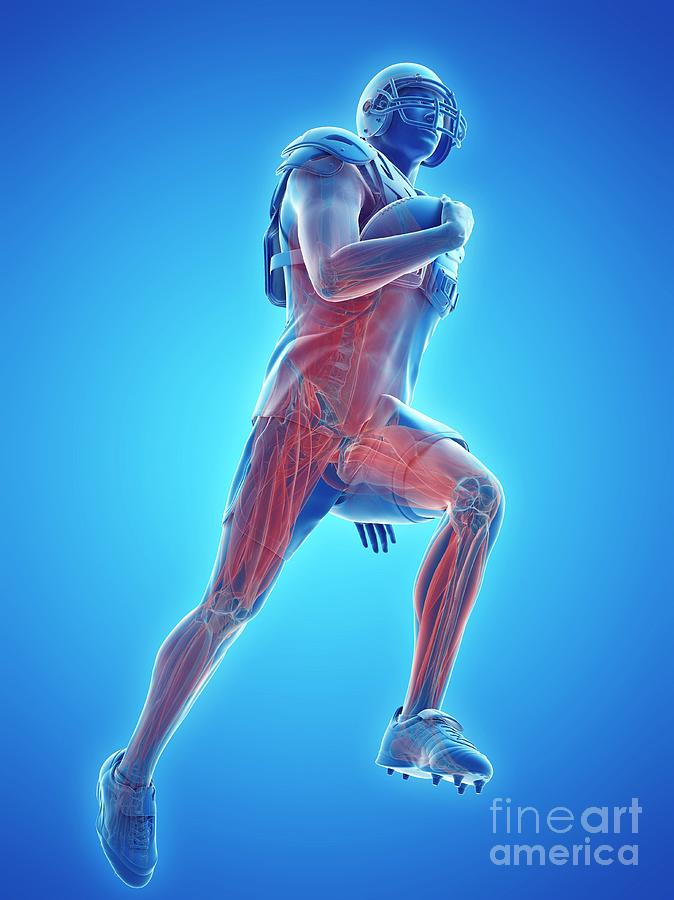 3d Photograph - American Football Players Muscles by Sebastian Kaulitzki/science Photo Library