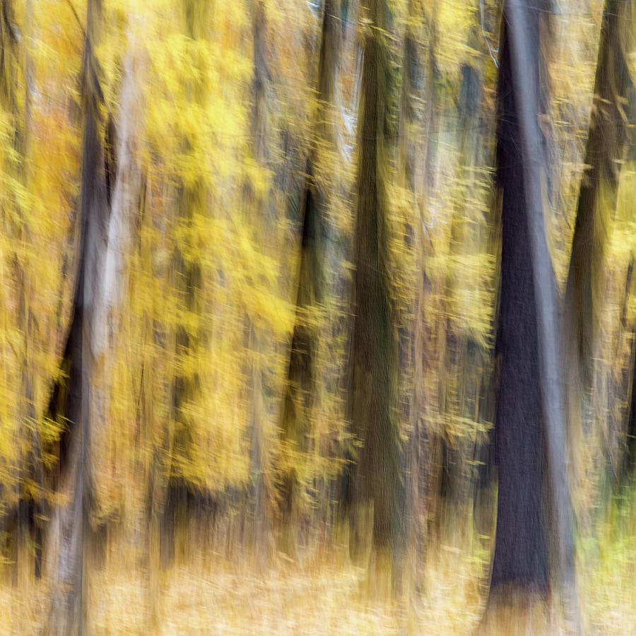 Fall Colors - Abstract Nature by Shankar Adiseshan