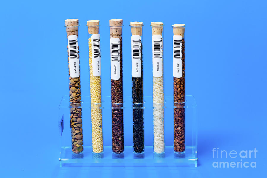 Test Photograph - Food Samples In Test Tubes by Wladimir Bulgar/science Photo Library