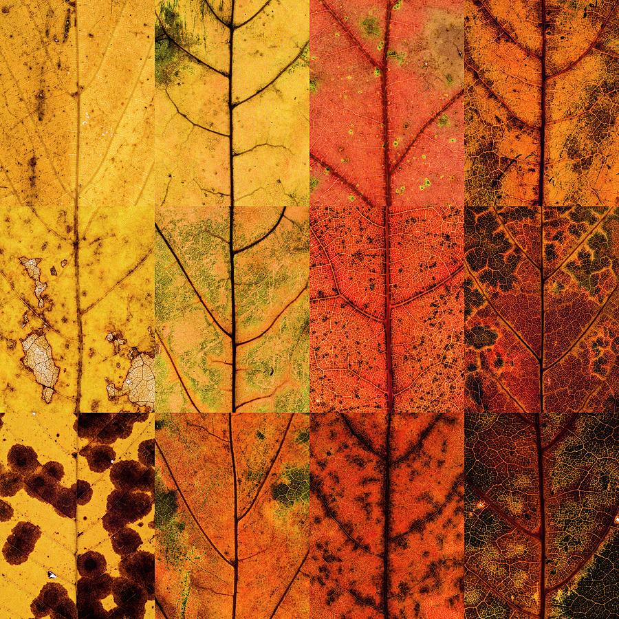 Swatches - Autumn Leaves inspired by Gerhard Richter by Shankar Adiseshan