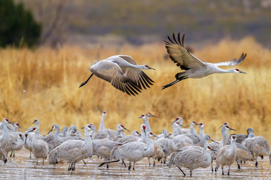 Usa New Mexico Bosque Del Apache Photograph By Jaynes Gallery