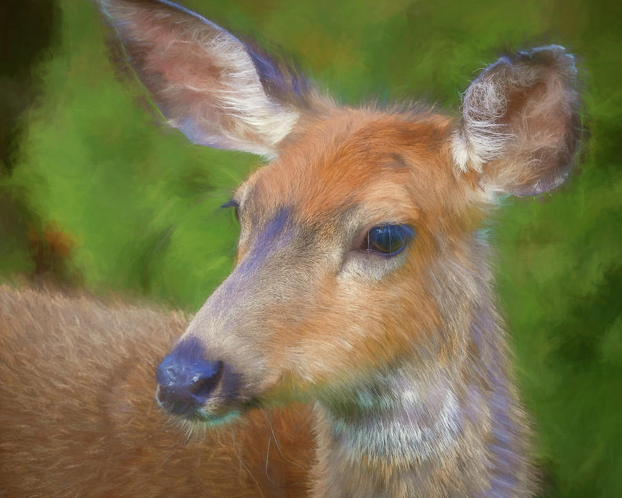 Close-up Photograph - Usa, Washington State, Seabeck by Jaynes Gallery