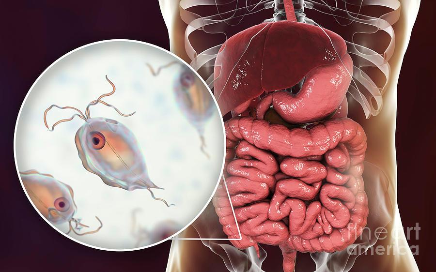 3 Dimensional Photograph - Pentatrichomonas Intestinal Parasite 15 by Kateryna Kon/science Photo Library