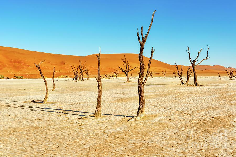 Dead Vlei near Sesriem in Namibia by Marek Poplawski