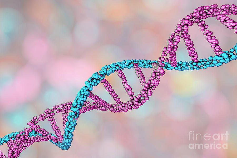 3 Dimensional Photograph - Dna Molecule by Kateryna Kon/science Photo Library