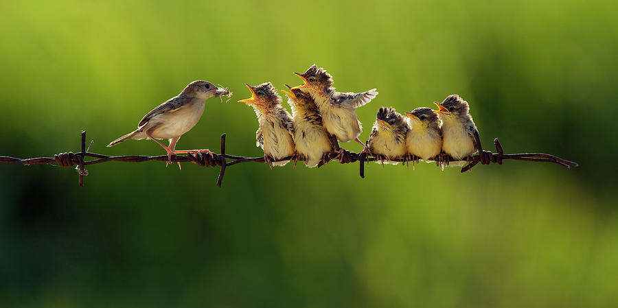 Nature Photograph - 16 by Iwan Tirtha