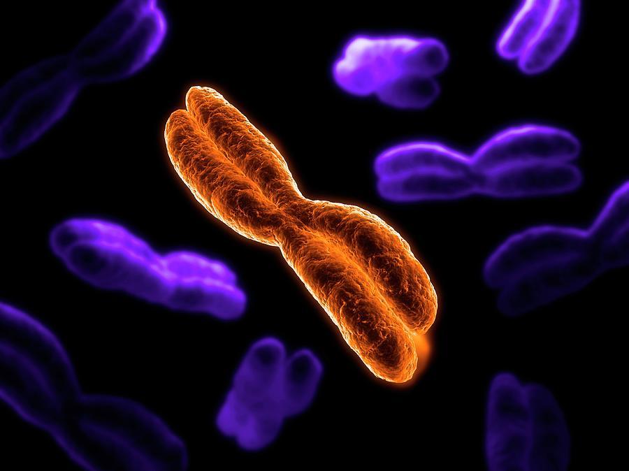 Chromosomes, Artwork Digital Art by Sciepro
