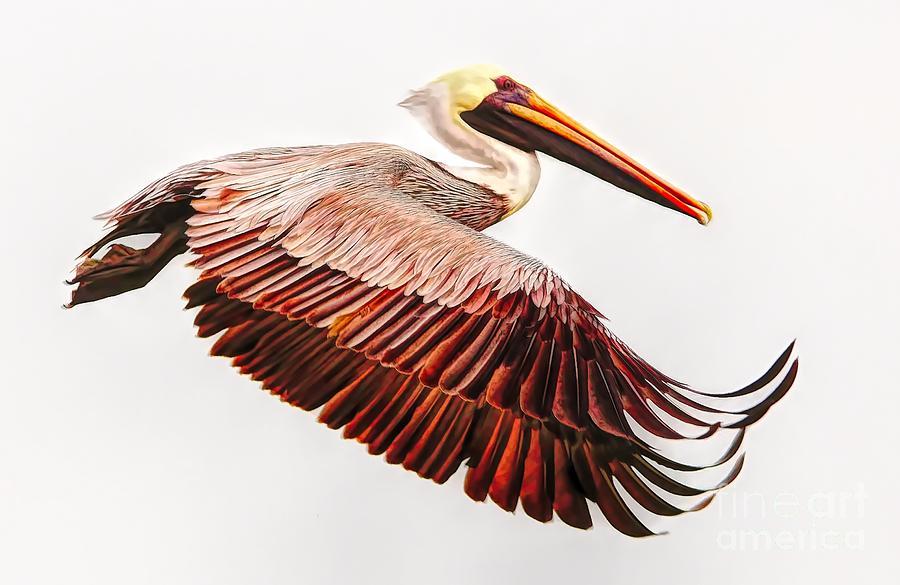 Pelican Wings by Paulette Thomas