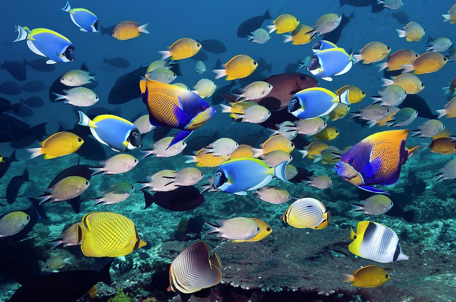 Tropical Reef Fish Photograph by Georgette Douwma