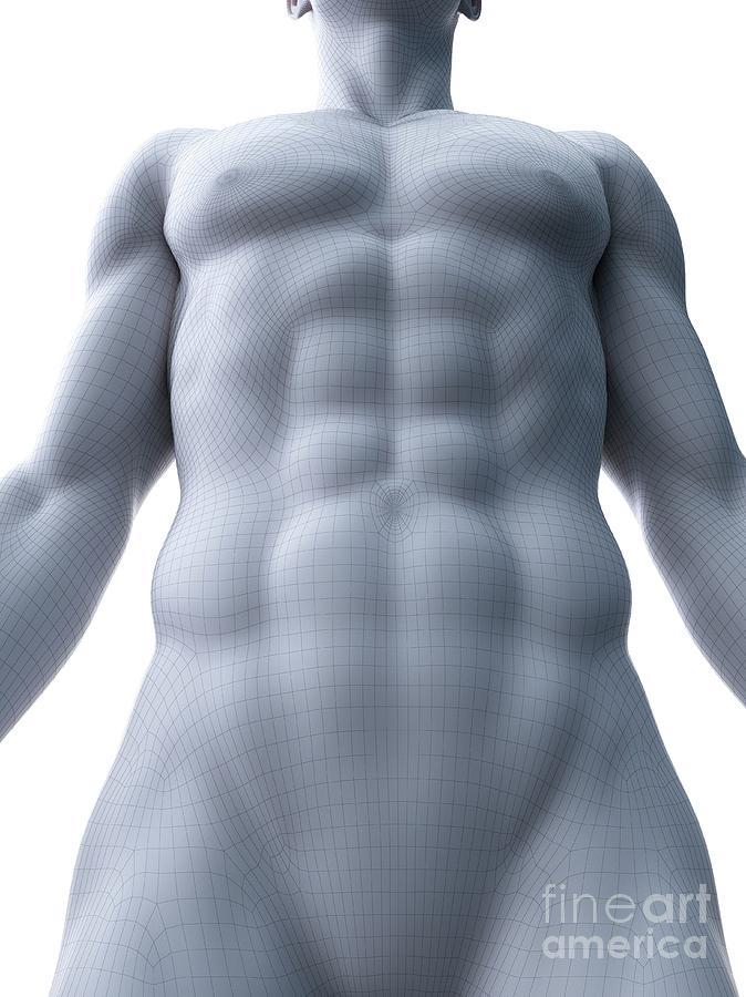 3d Photograph - Abdominal Muscles by Sebastian Kaulitzki/science Photo Library