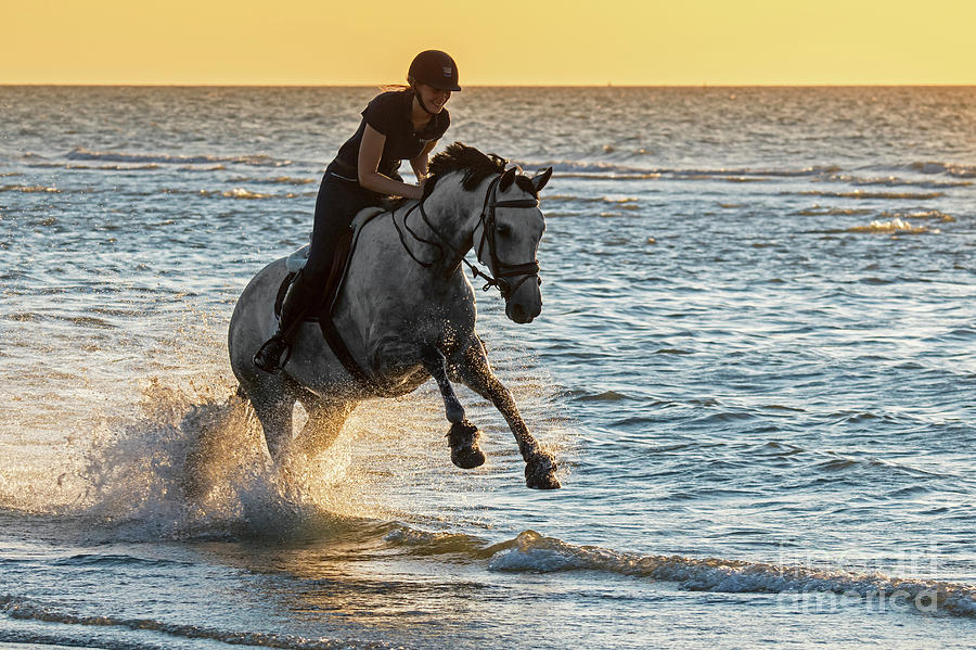 Galloping in Sea by Arterra Picture Library