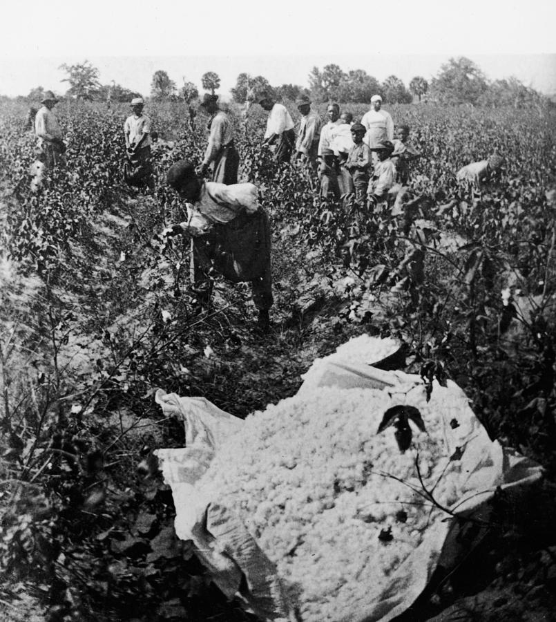 19th Century Cotton Picking Photograph by Lightfoot