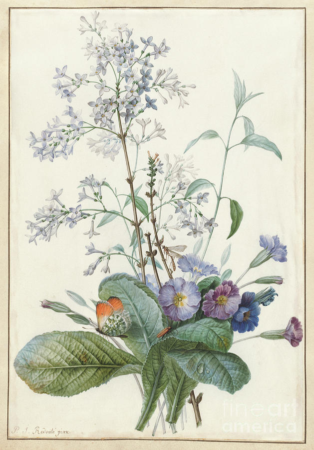 Redoute Painting - A Bouquet Of Flowers With Insects  by Pierre-Joseph Redoute
