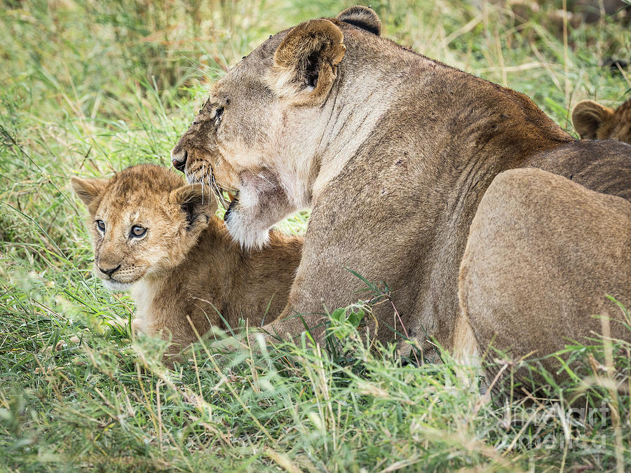 A Mothers Love by Robin Zygelman