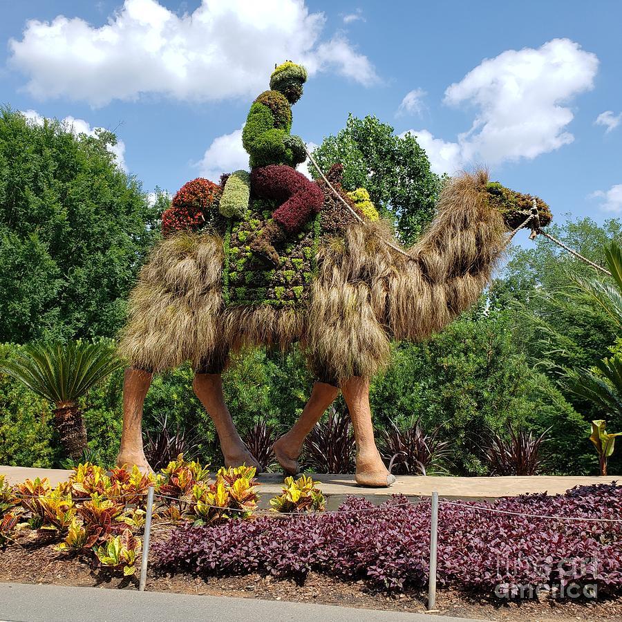 2 atlanta botanical gardens donna brown - Atlanta Botanical Gardens Membership Promo Code 2019