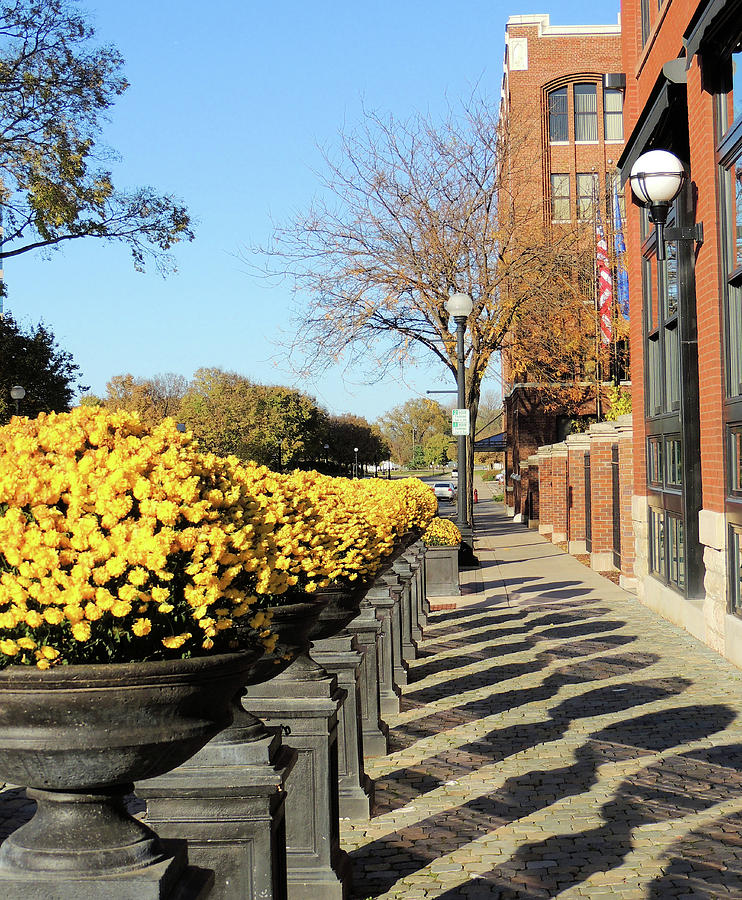 Autumn Beauty Photograph