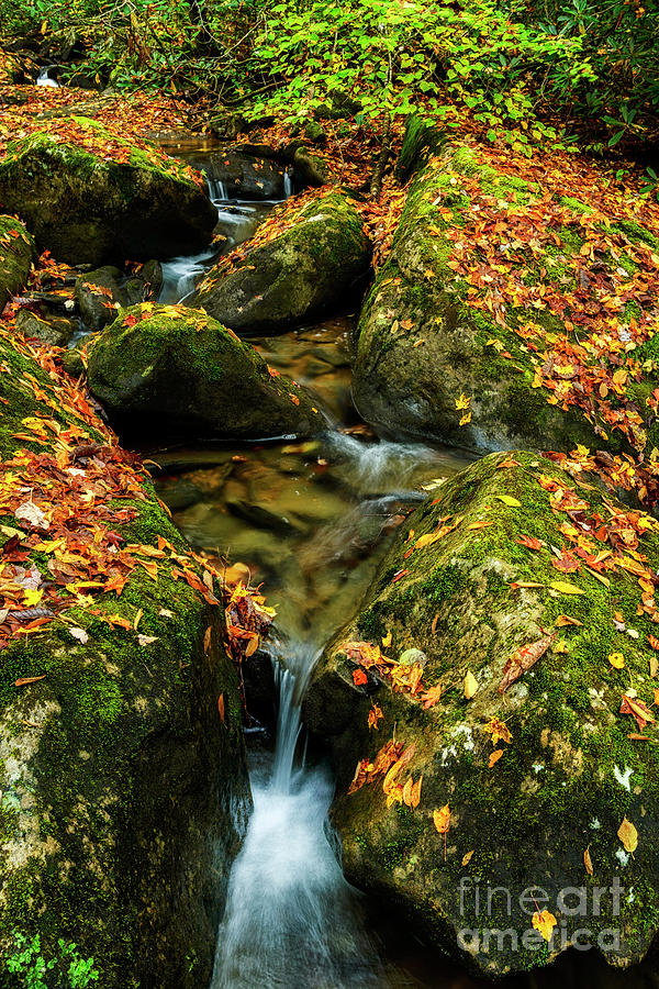Autumn on the Rocks by Thomas R Fletcher
