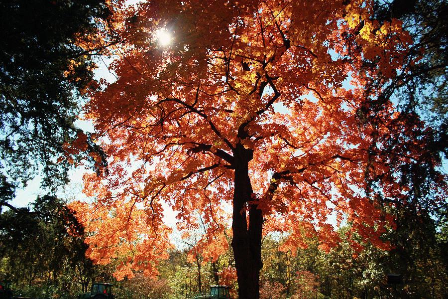 Autumn Splendor Photograph