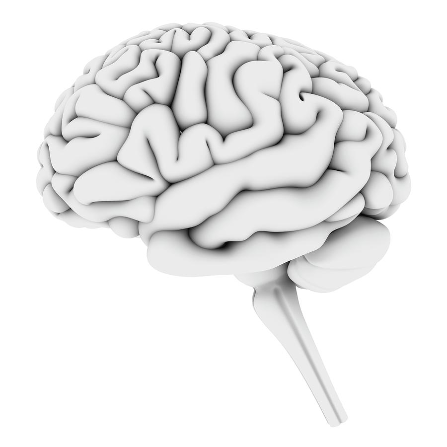 Brain, Artwork Digital Art by Pasieka