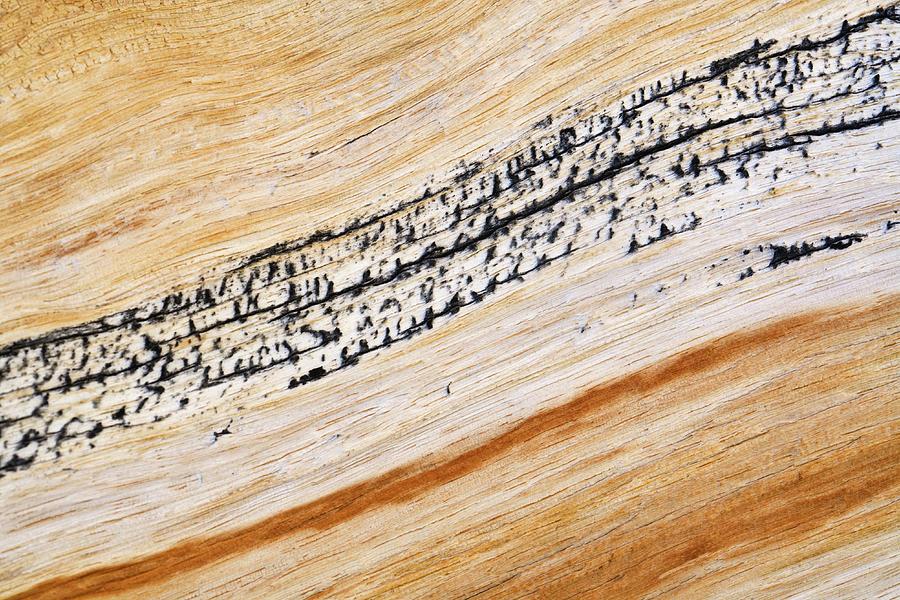 Bristlecone Pine Texture Photograph by Donald E. Hall