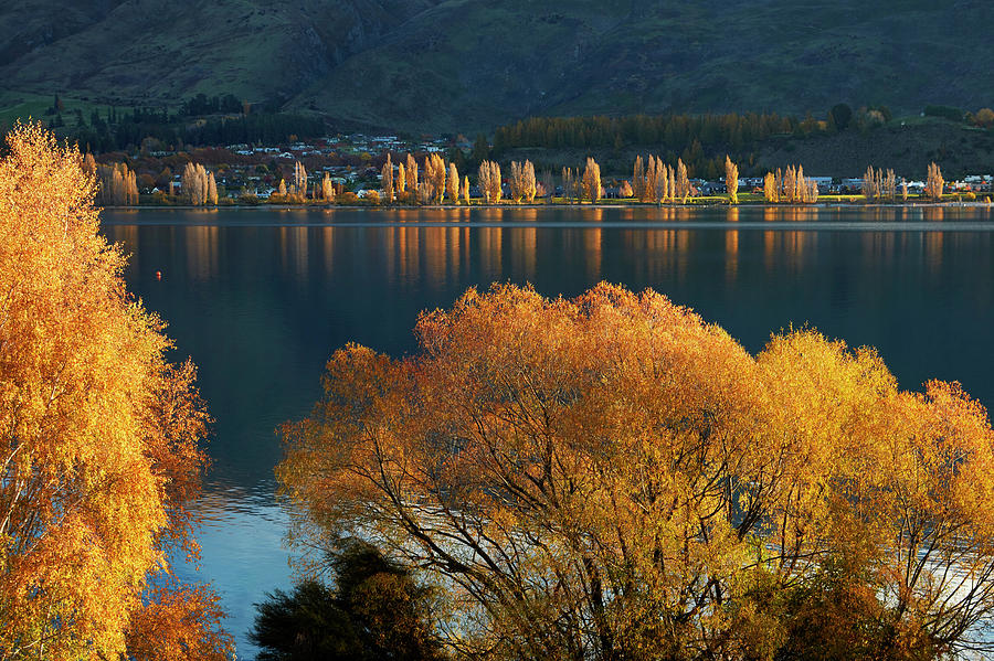 Agua Photograph - Clouds And that Wanaka Tree Reflected by David Wall
