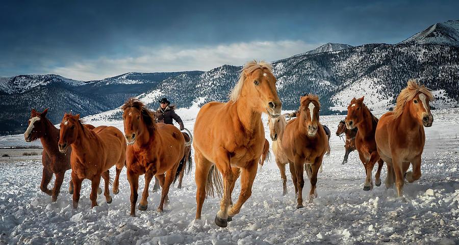 Colorado Horses by David Soldano