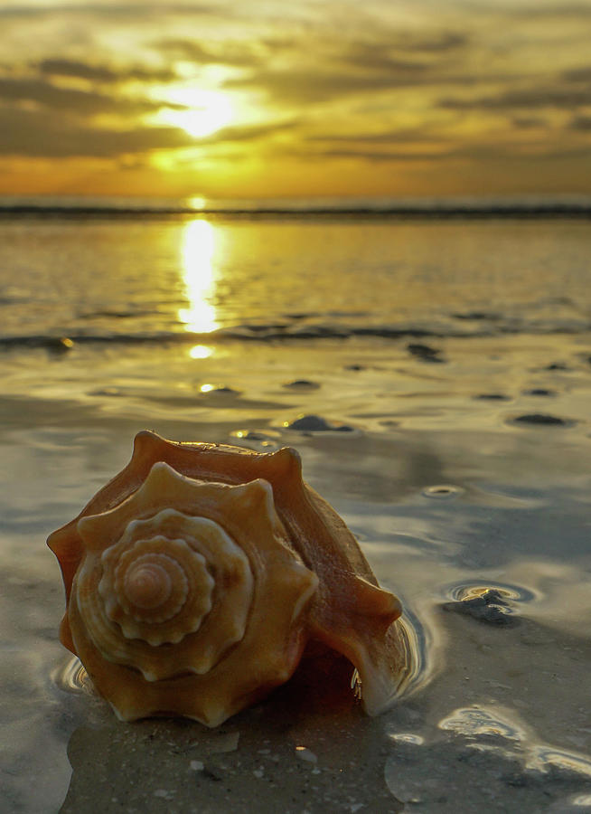 Conch Sunset Photograph