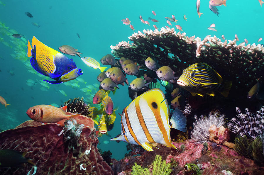 Coral Reef Fish Photograph by Georgette Douwma