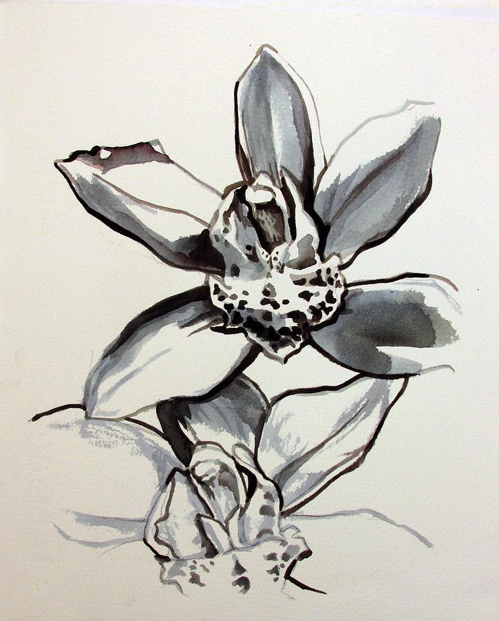 cymbidium orchid by Alfred Ng
