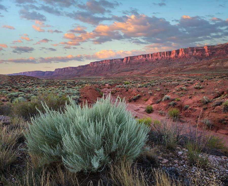 Mp Photograph - Desert And Cliffs, Vermilion Cliffs Nm by Tim Fitzharris