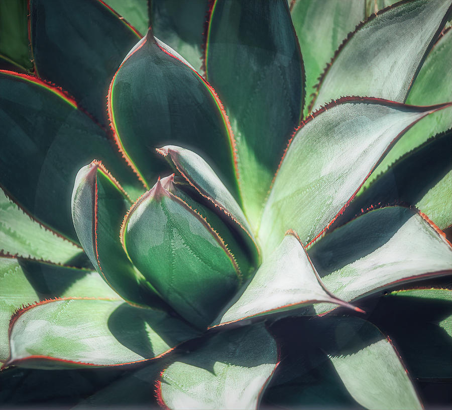 Desert Cactus Blue Glow Agave by Julie Palencia