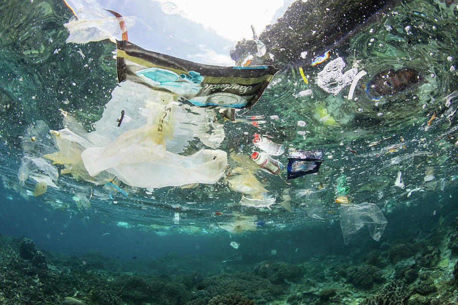Discarded Plastic Bags And Other Trash by Ethan Daniels